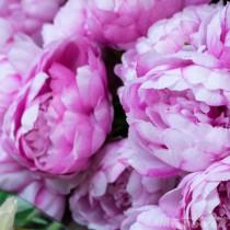 Frühlings Blumen Rahmen-0561